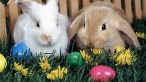 Easter-Bunny-2013-Pictures-Background-HD-Wallpaper-1024x576